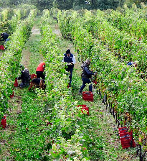 cantina-monchieri-i-nostri-vini-vendemmia