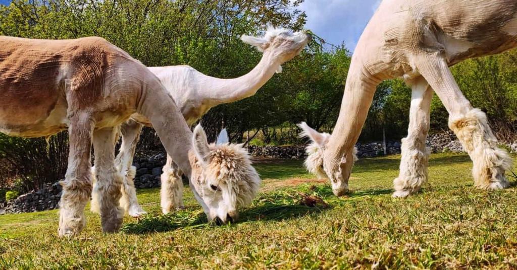 cantina-monchieri-servizi-alpaca