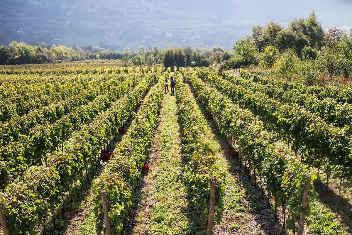 cantine-monchieri-concarena-valle-camonica-vino